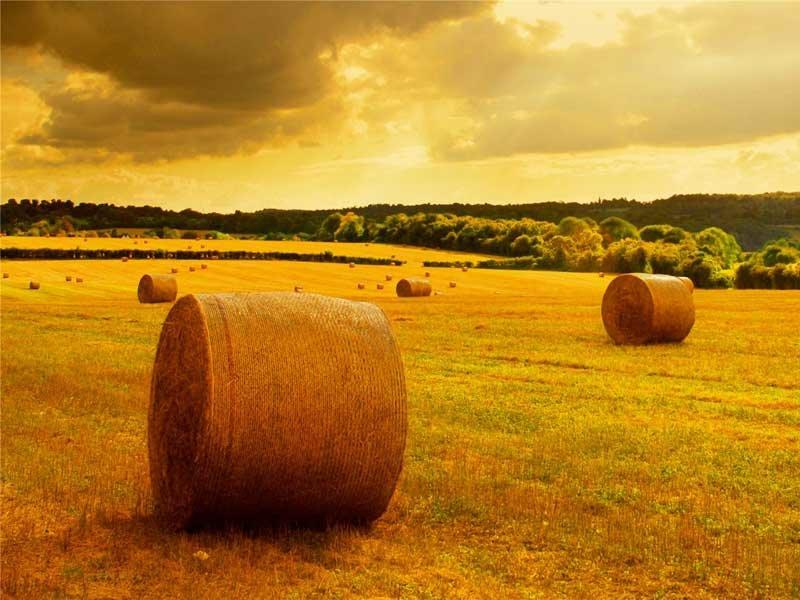 Убранное поле с сеном