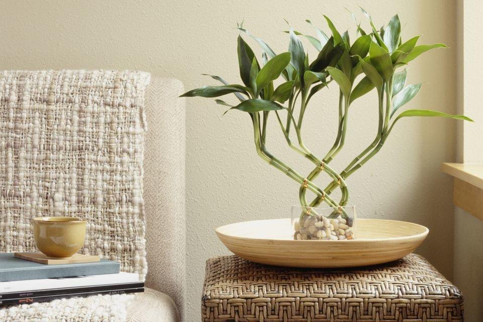 Какие растения должны быть в квартире по фен шуй
