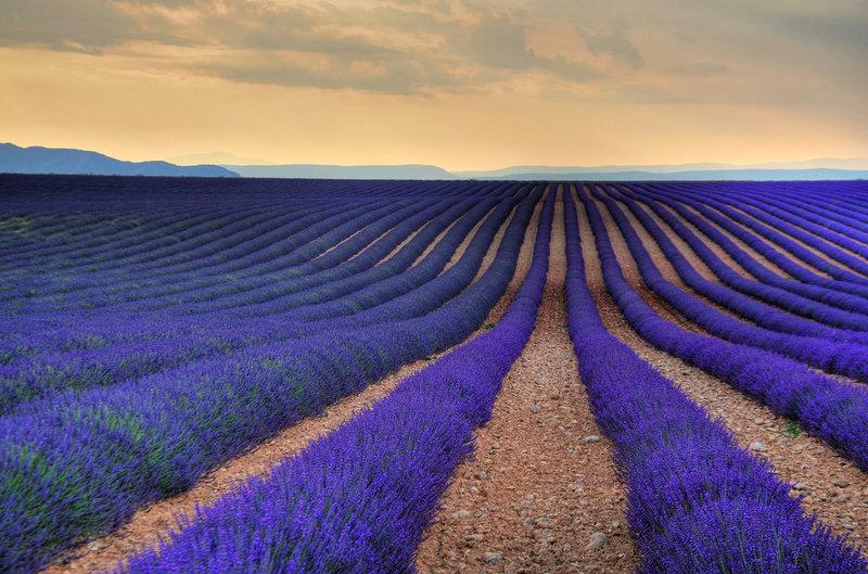 Цветочное поле и сумерки