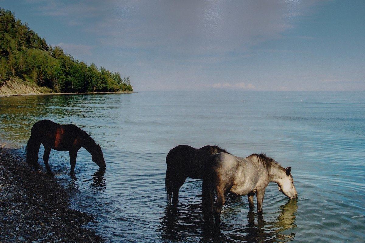 озеро конь в картинках вот такую