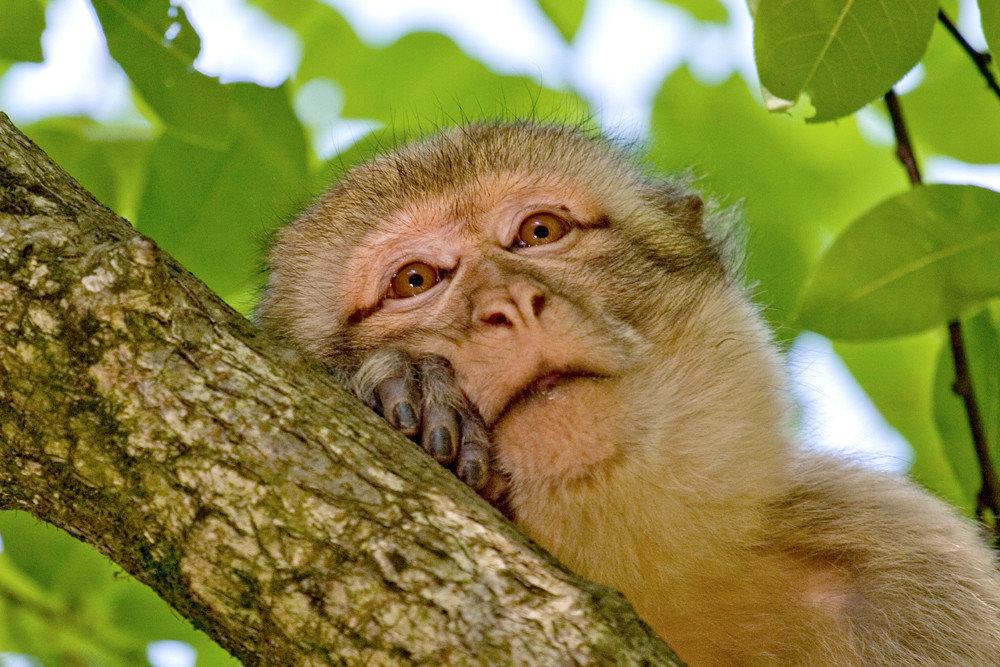 Картинки с веселыми обезьянами