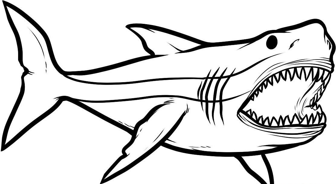 Акулы картинки карандашом чтобы