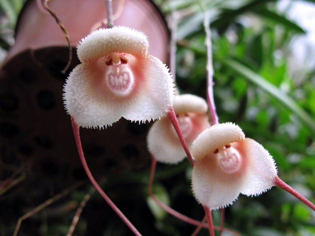 Смешные картинки цветка, днем