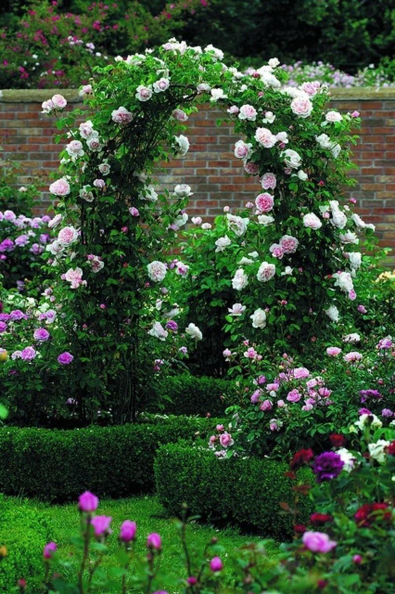 Цветы для арки на даче фото