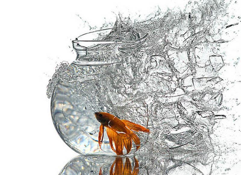 Высокоскоростная фотография. Рыбка