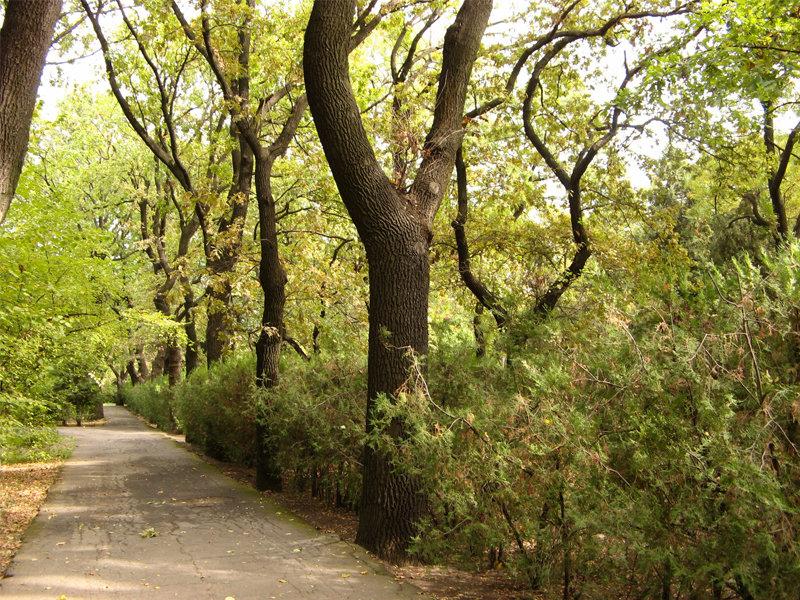 Тропа в Ботаническом саду.