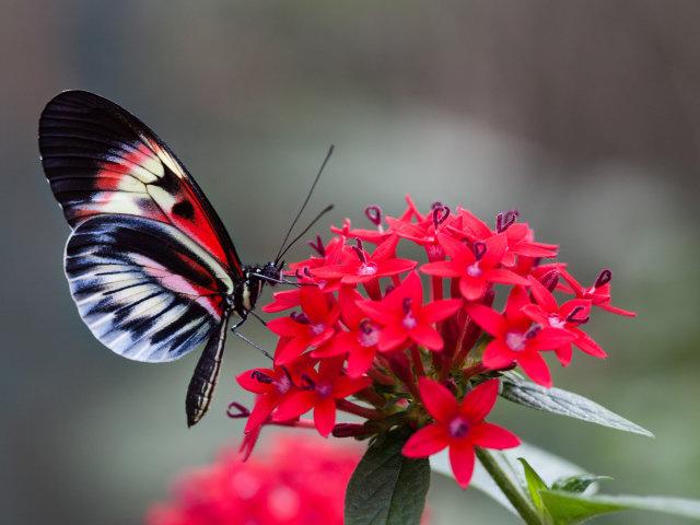 Открытка «Бабочка на цветке» » Сделай сам 74