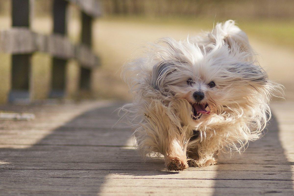 Собака, бежит, в движении