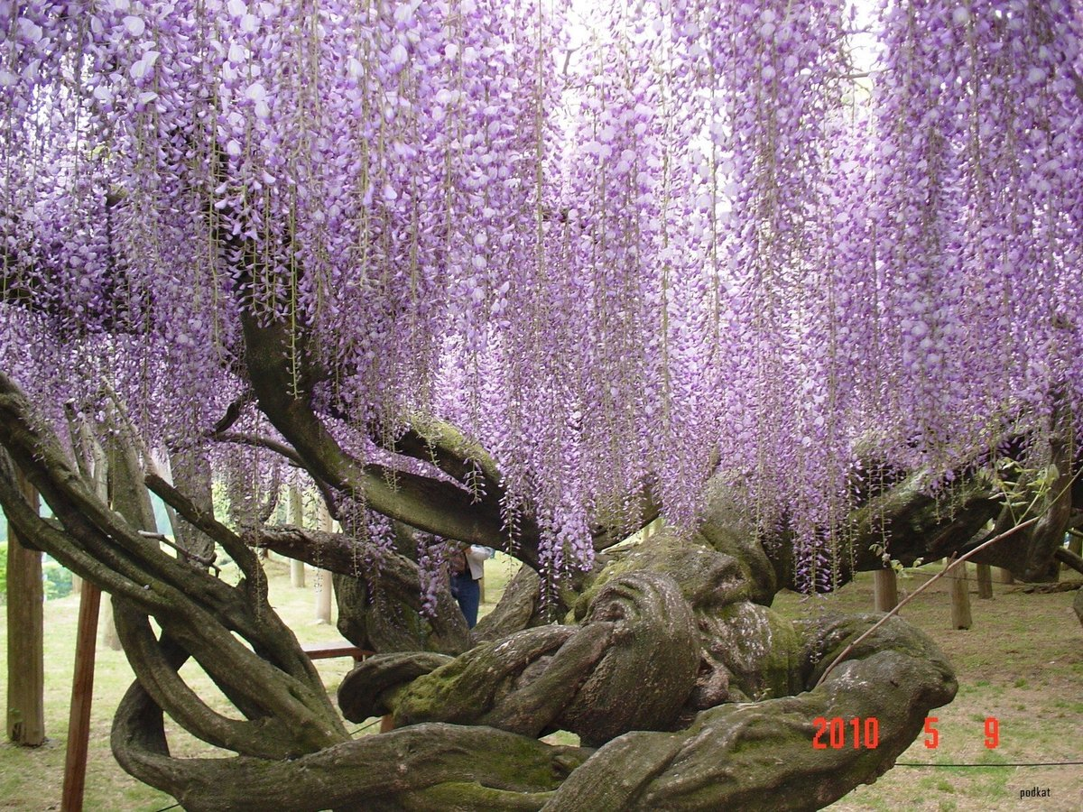 Самые красивые растения мира фото с названиями, надписями