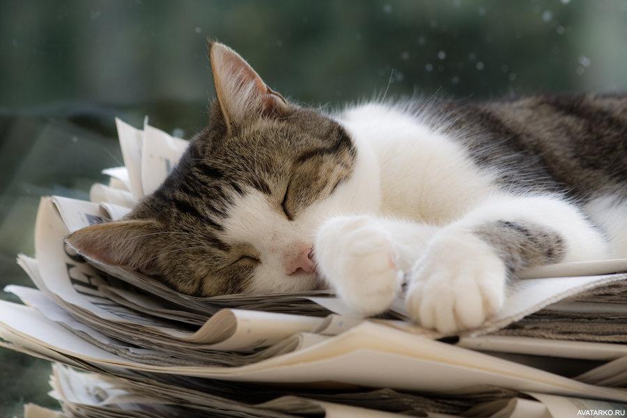 фотографий картинки котики усталые уникальное образование красных