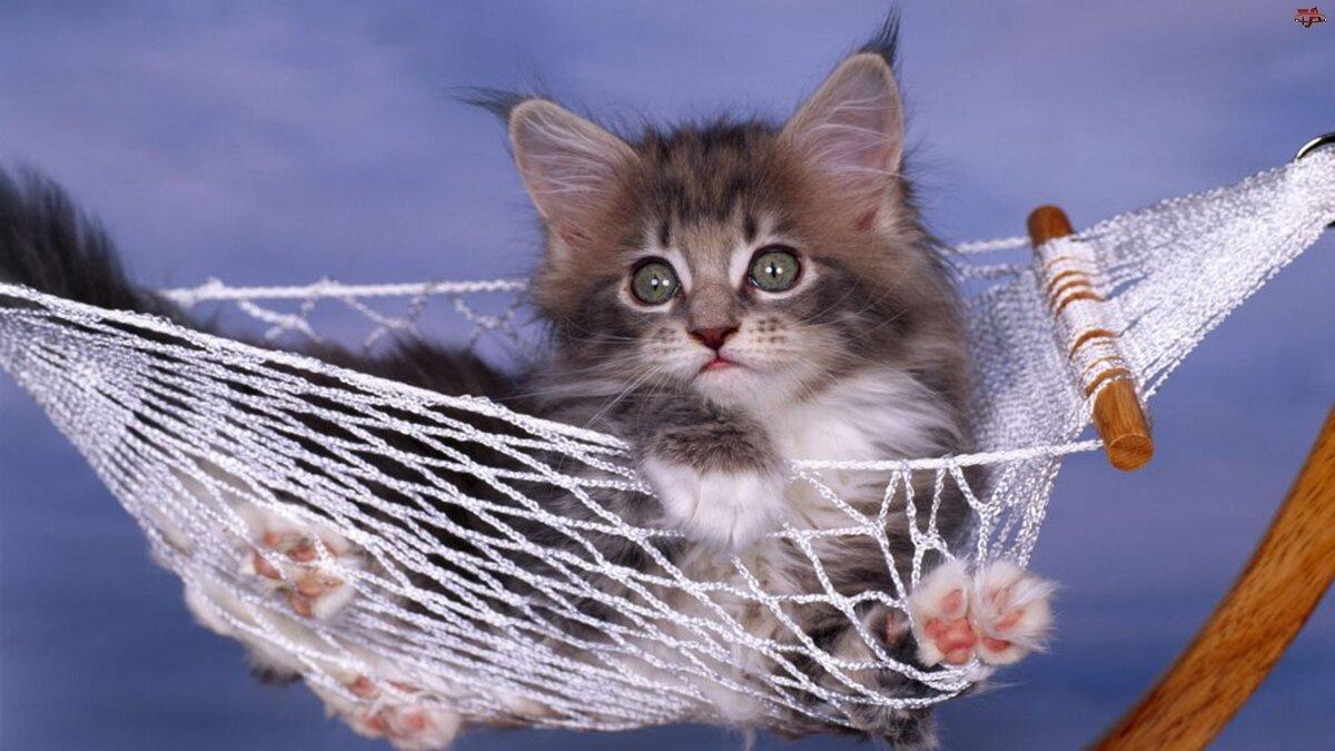 котенок в гамаке фото способны