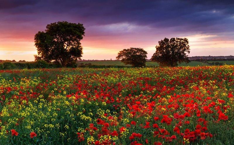 summer evening poppies 1920x1200 wallpaper330967