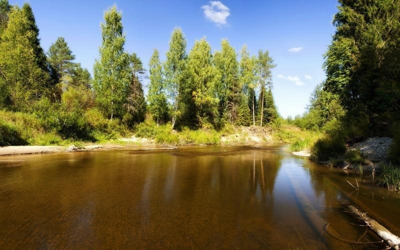 Река и лес, летняя погода замечательна.