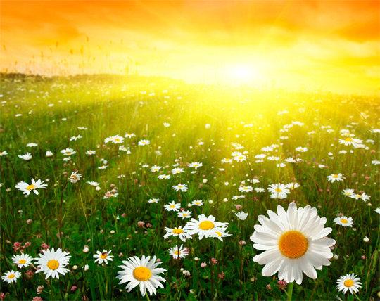 Картинки красивые лето (35 фото) • Прикольные картинки и юмор Ромашки, красивый закат.
