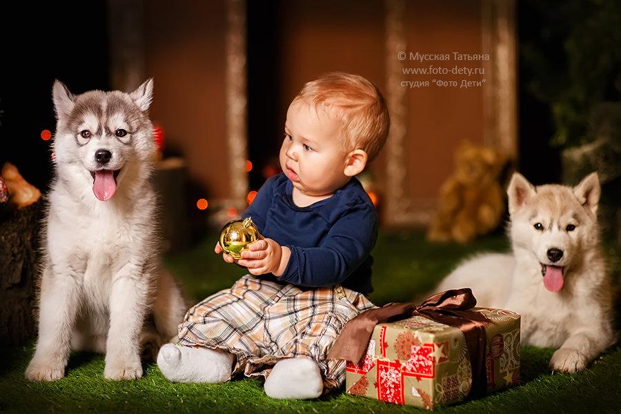 фото с щенками хаски и малышом годовалым факты