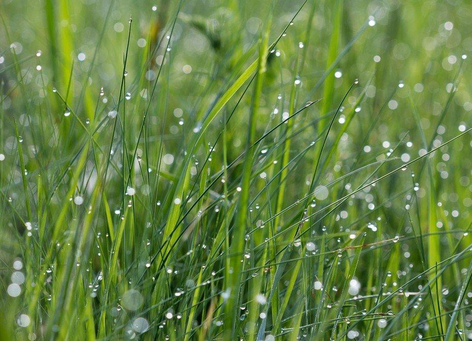 Картинки трава и дождь