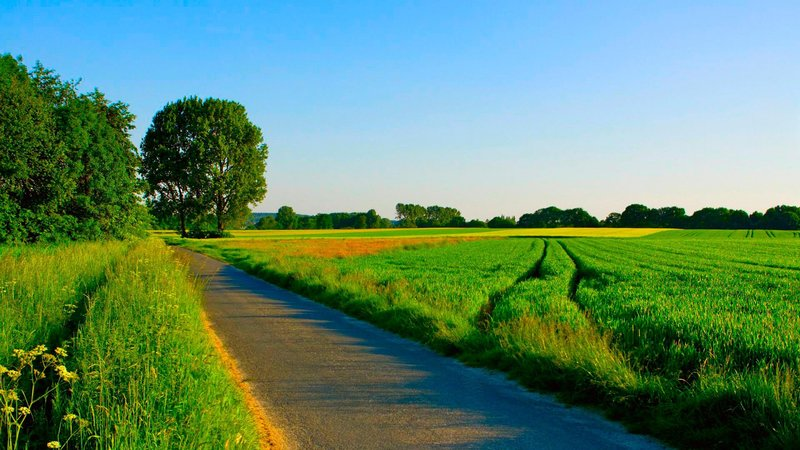 Nature Seasons   Summer Summer road among manicured fields 078197