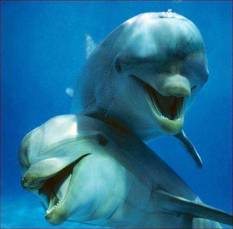 нам картинки рыб которые смеются мире