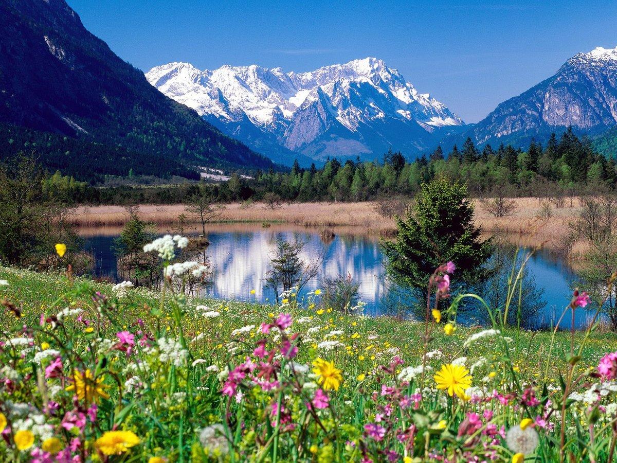 Картинки горы и цветы красивые