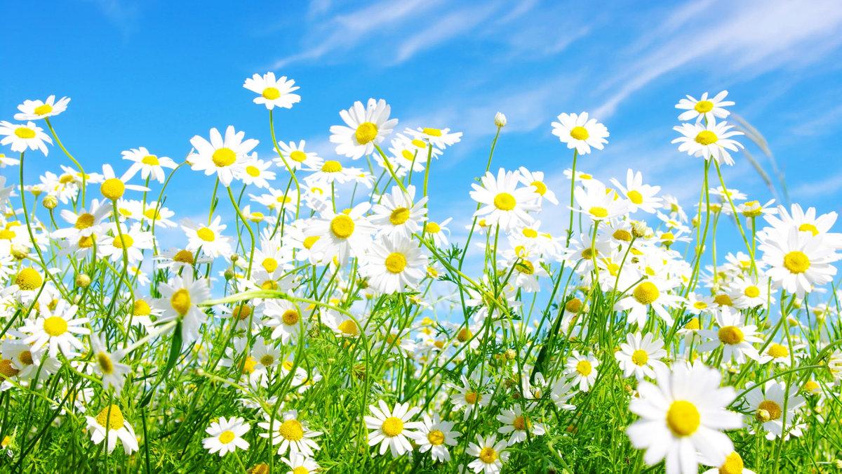 Летние Цветы  YouTube