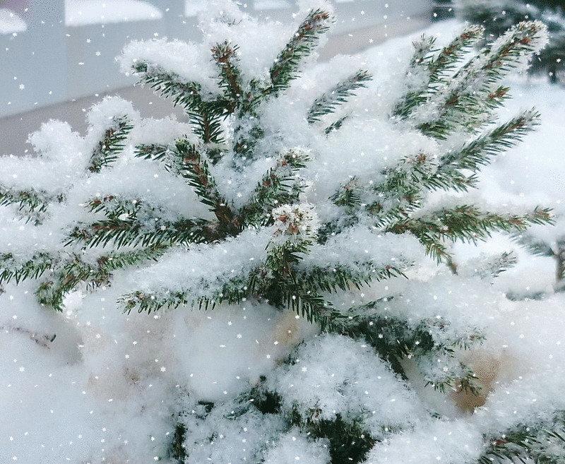 Анимированные картинки зима и снег