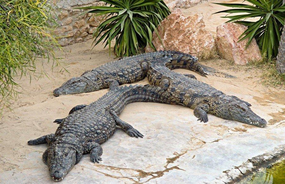 Картинки крокодиловой фермы