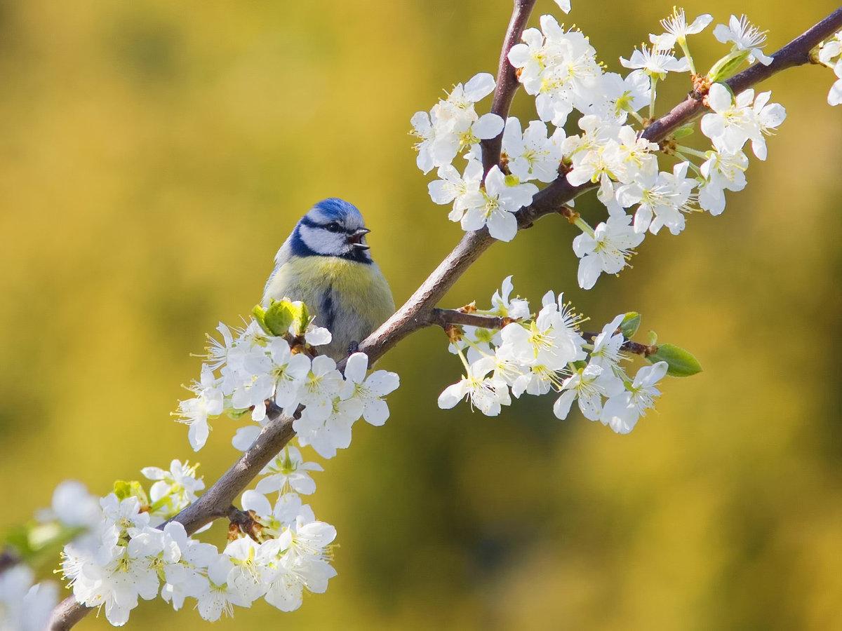 Открытки о любви о весне, рабочий стол прикольными