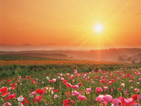 Полевые цветы на рассвете 74