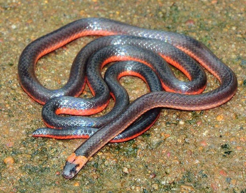 Змеи разновидность в картинках