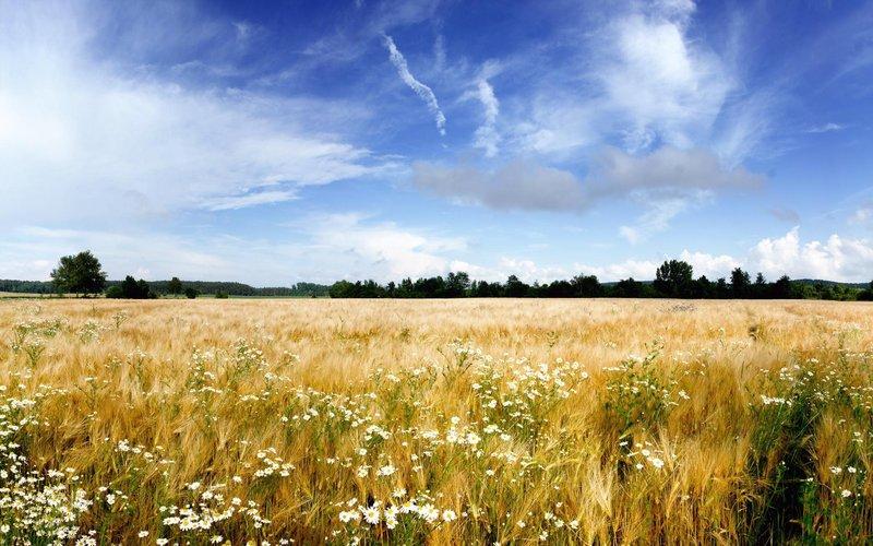 поле.деревья.цветы.пейзаж