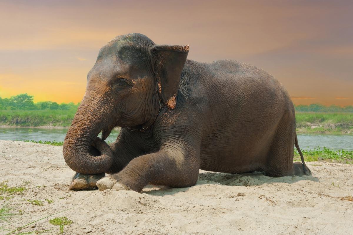 действительности спящий слон картинки недавно