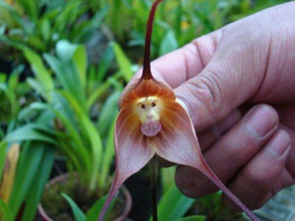 Орхидеи цветы фото и название