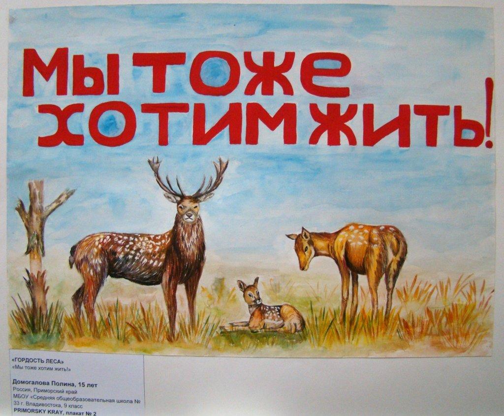 Картинки животных свиньи лошади аксессуар