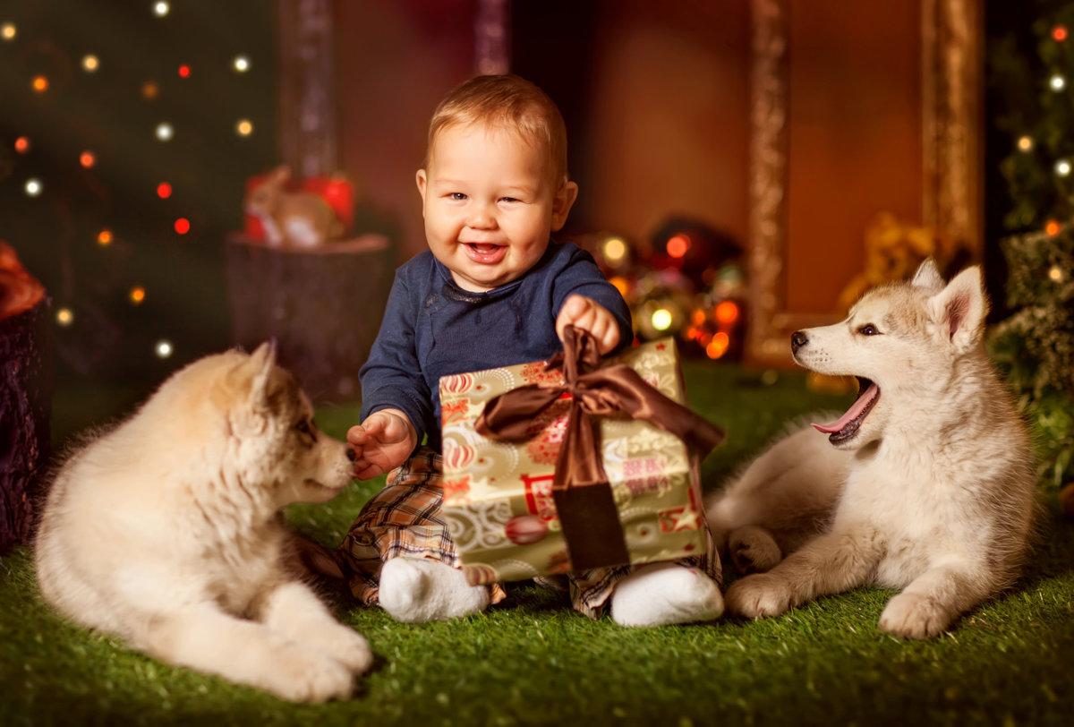фото с щенками хаски и малышом годовалым производственная организация