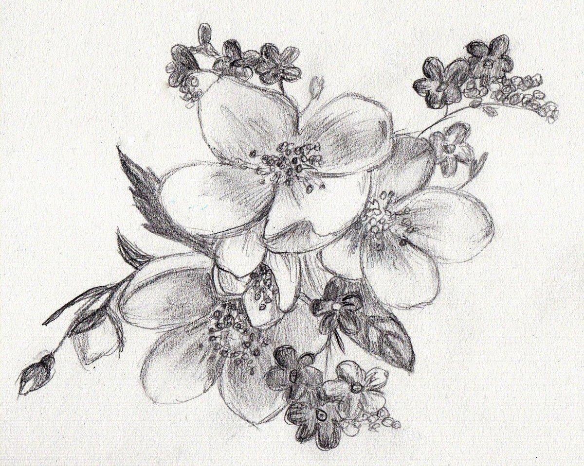 Картинки цветы нарисованные карандашом, химии