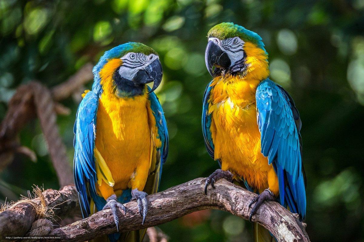 Днем медицинского, в картинках попугая