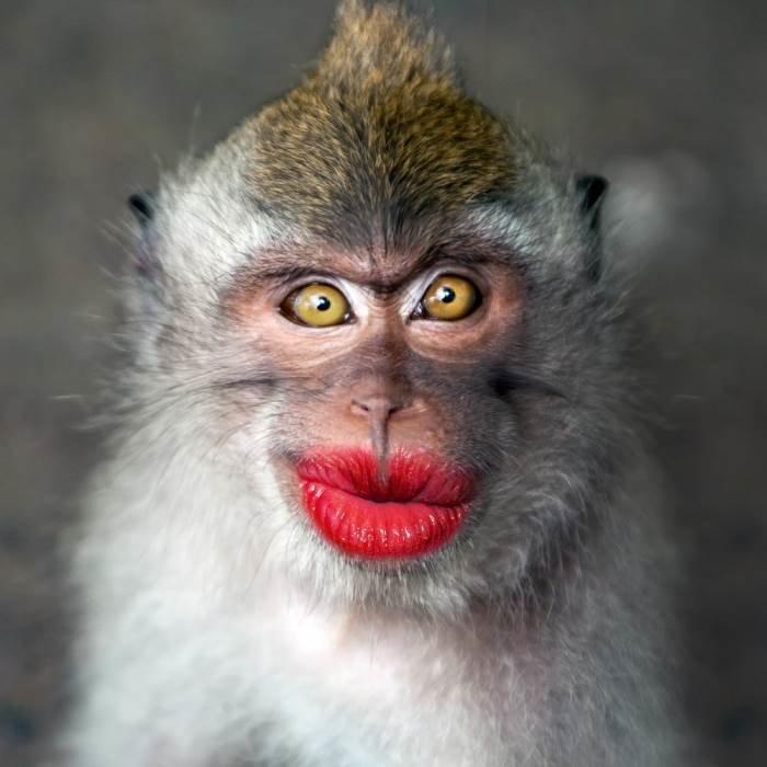 Картинка смешная обезьяны