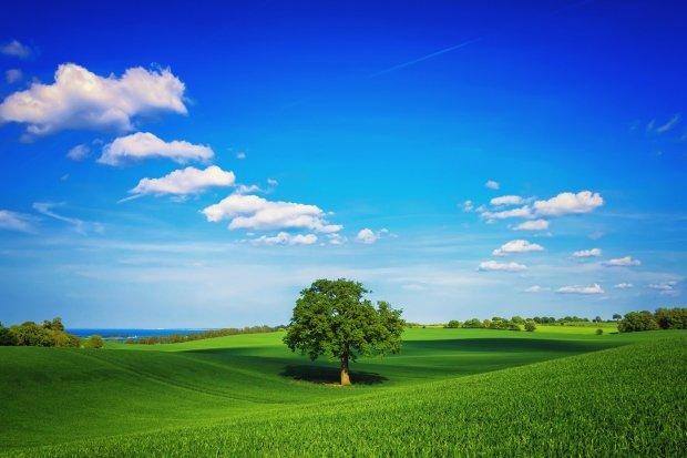 голубое небо и зеленое поле