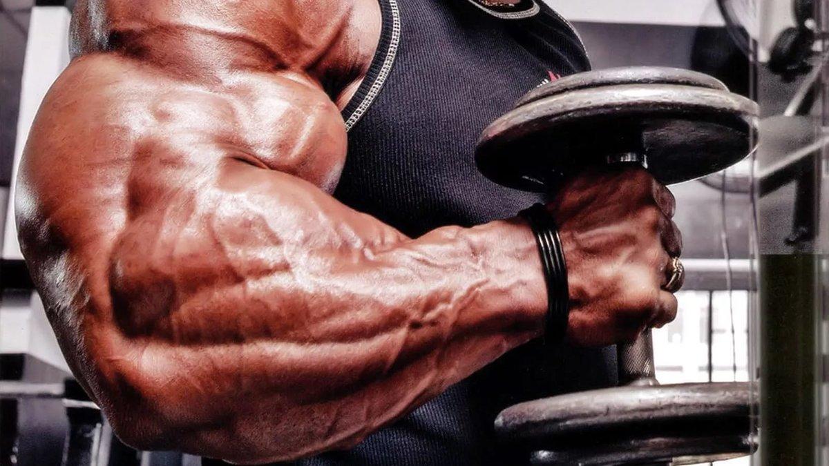 Бронхалис мышца фото