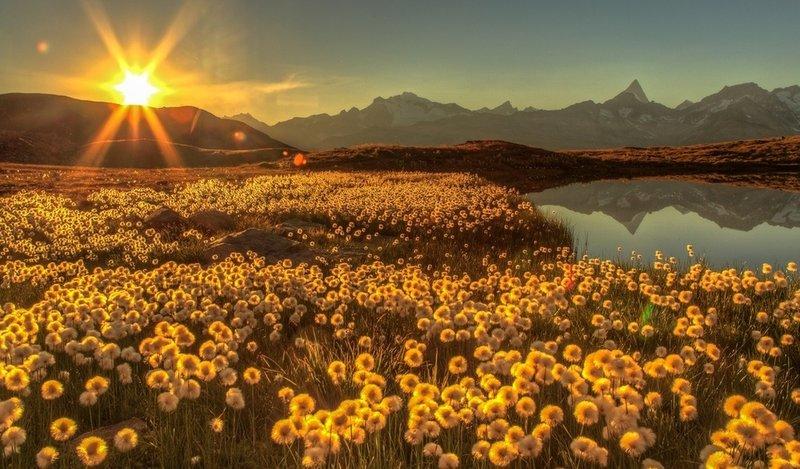 Рассвет над цветочным полем