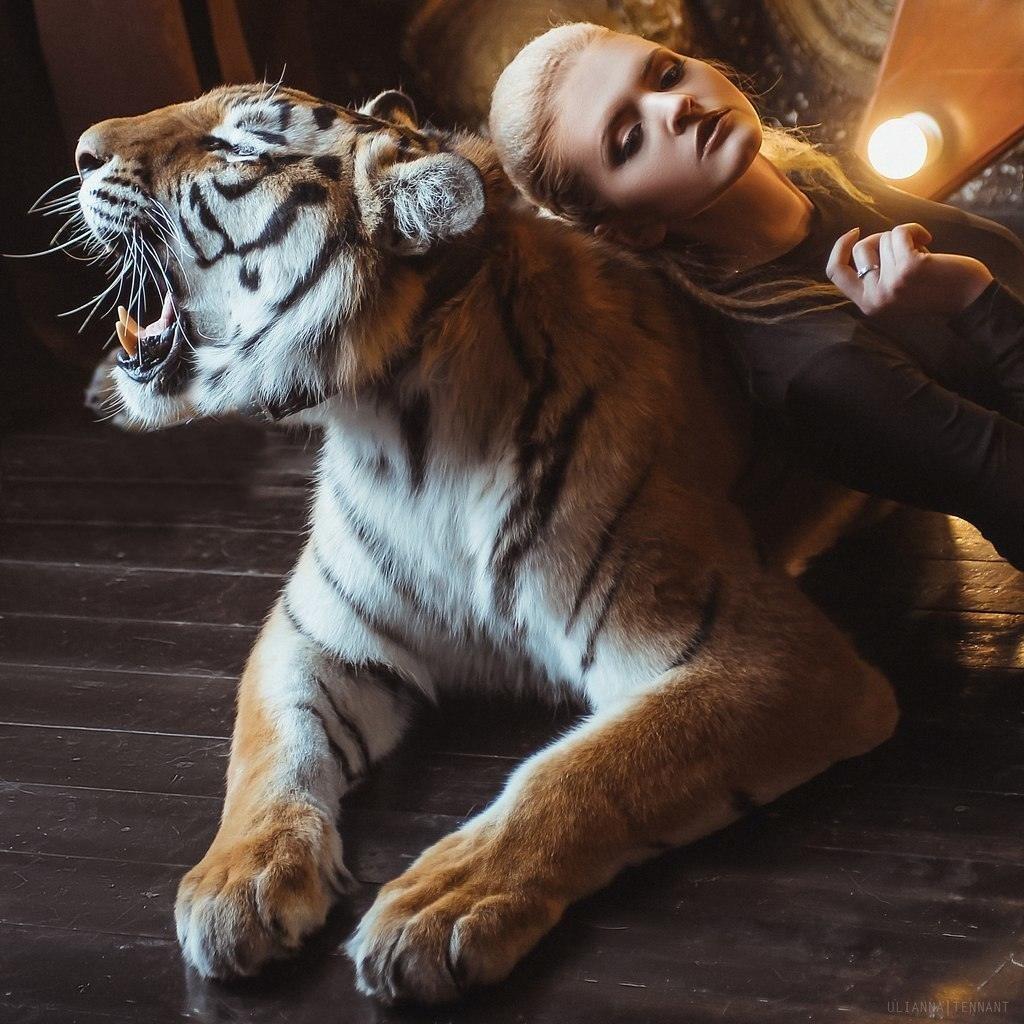 Тигр мой картинки мужчине