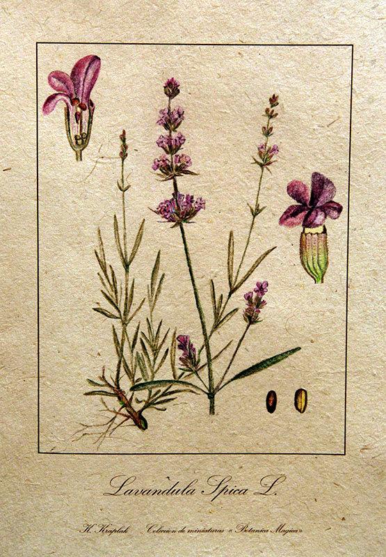 Днем, старинные гербарии картинки