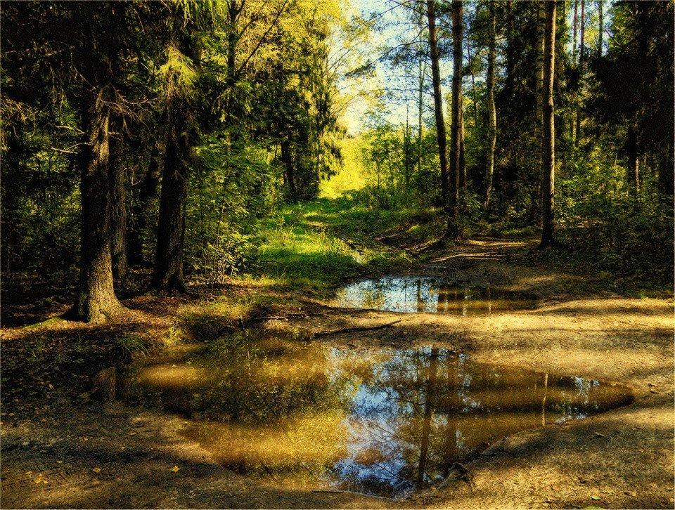 фото в лесу после дождя этой