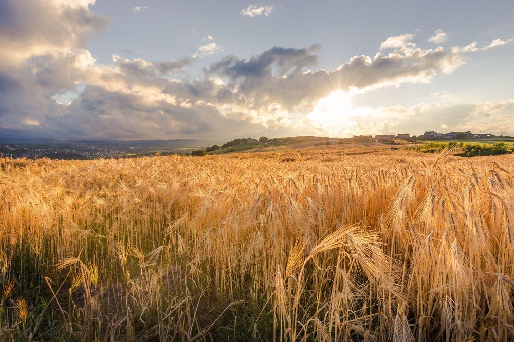 расположено фото полей в сентябре для фотографий кистей линиями