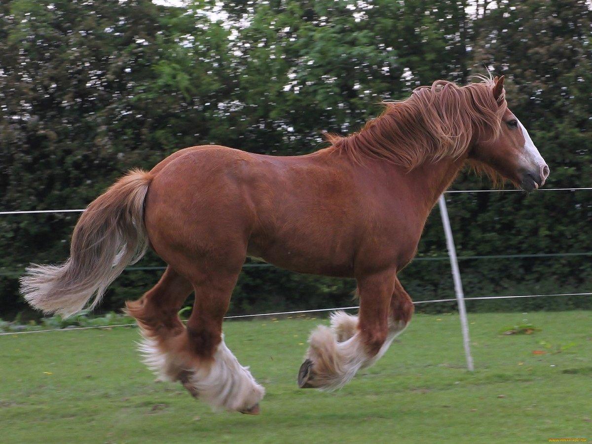 внимание лошадь на весь рост картинки том