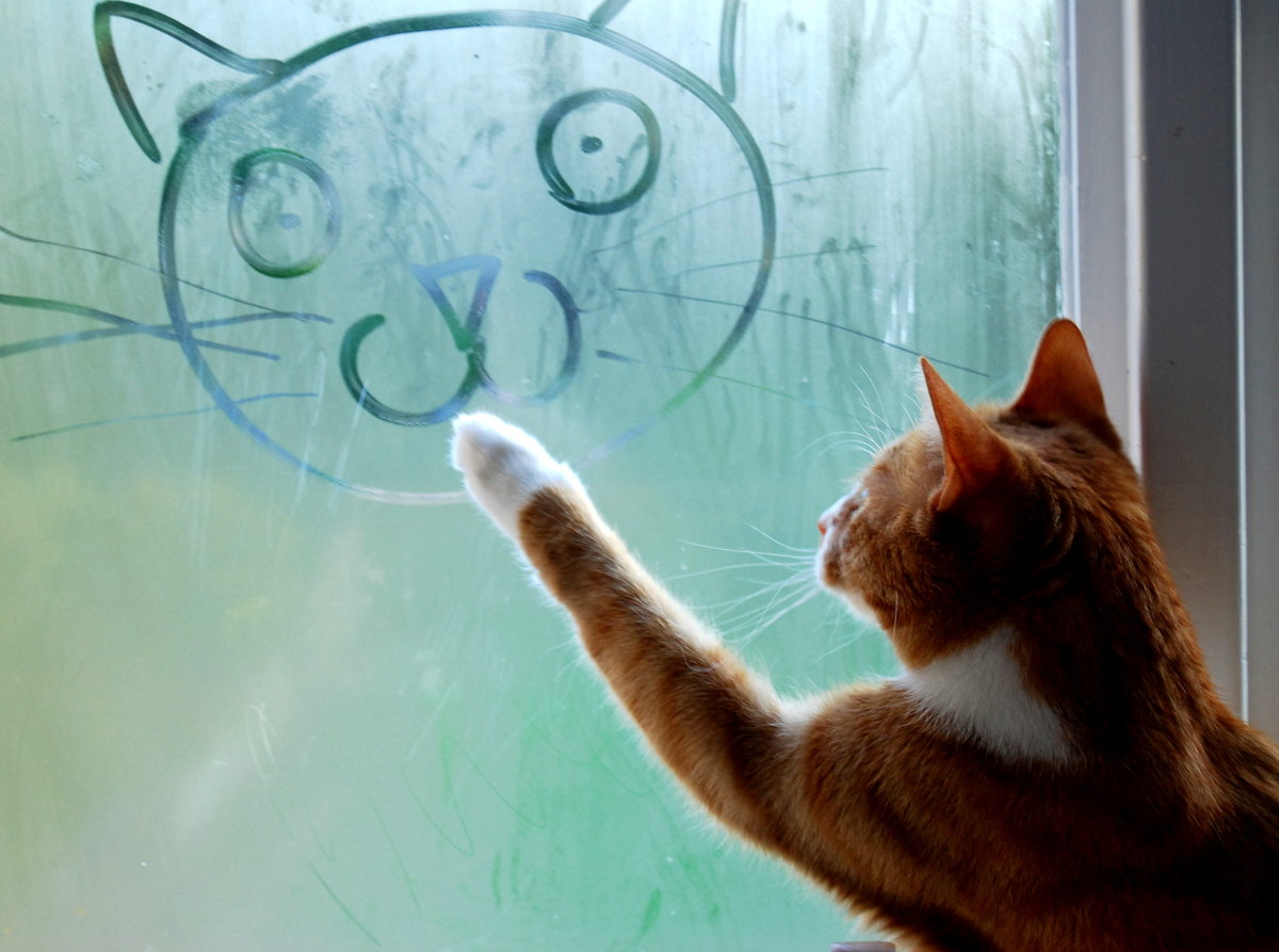 Картинках, как стекло смешные картинки