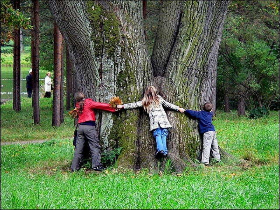 сожалению, картинки забота о лесе тут начинаются