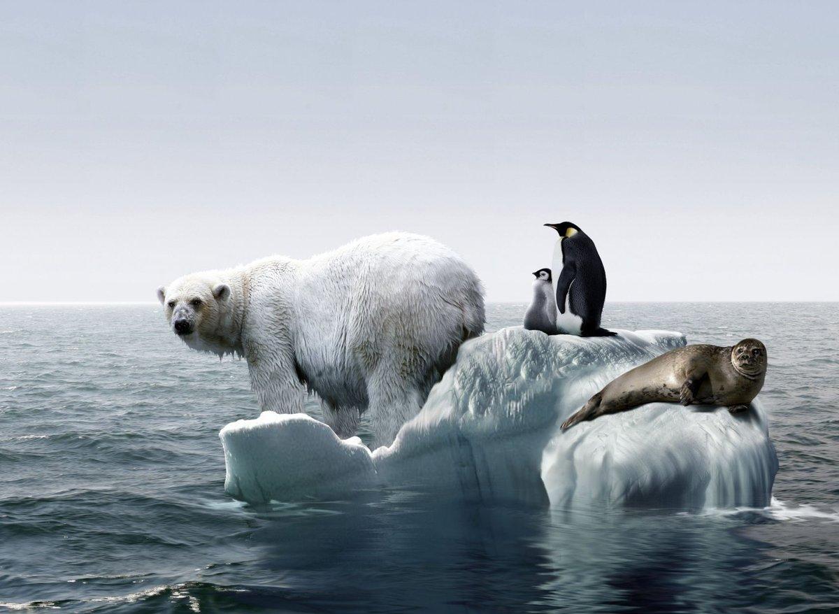 Глобальное потепление играет только в пользу России