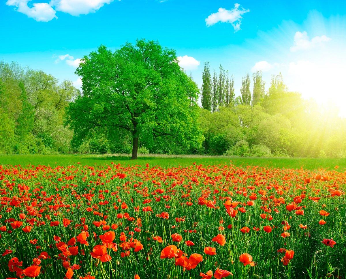 большинство картинки красивые природа весна и лето звезда, кажется