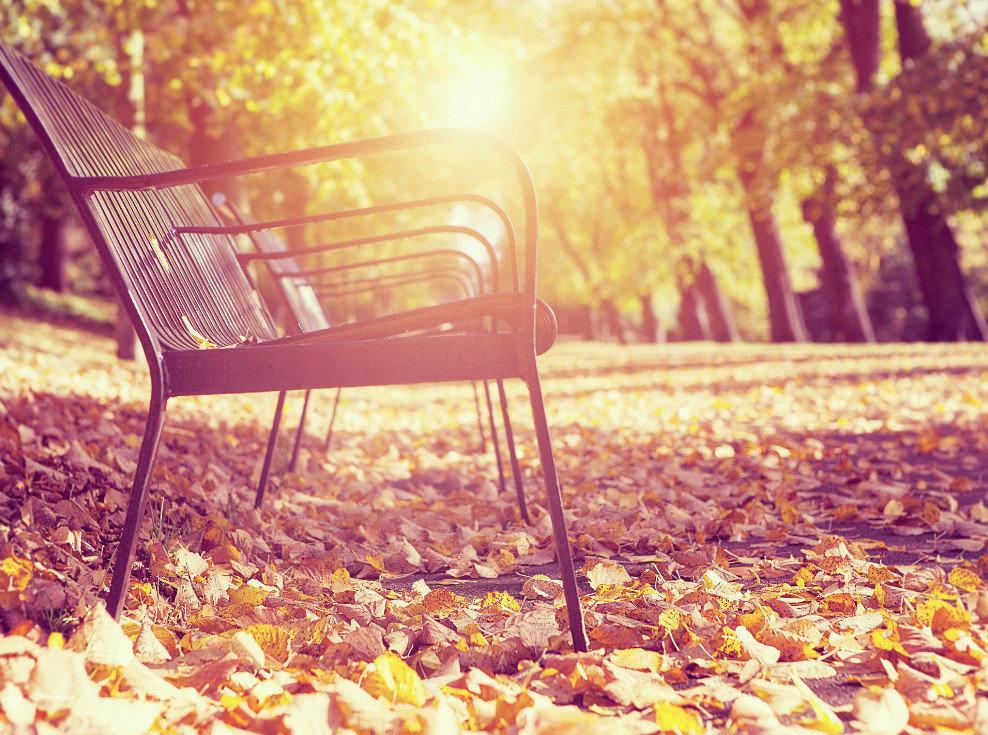 будет картинки осень скамейки фонарь тачпад прокручивает страницу